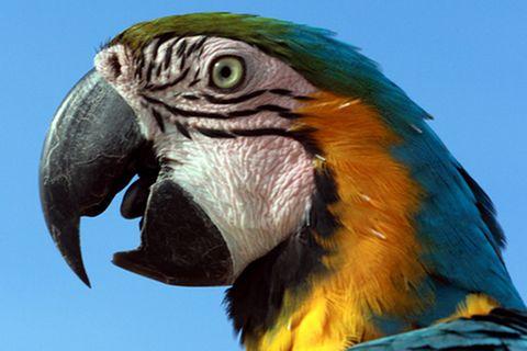 Tierlexikon: Papageien - von Kopf bis Fuß