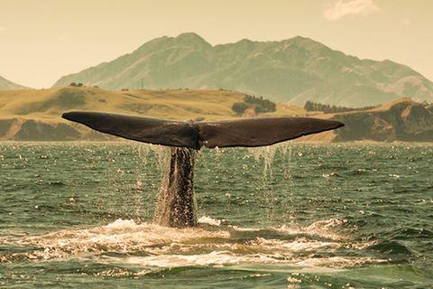 Wikinger: Wale - Was die Tiere den Wikingern alles gaben