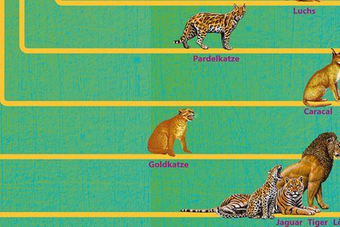 Evolution: Der große Stammbaum der Katzen