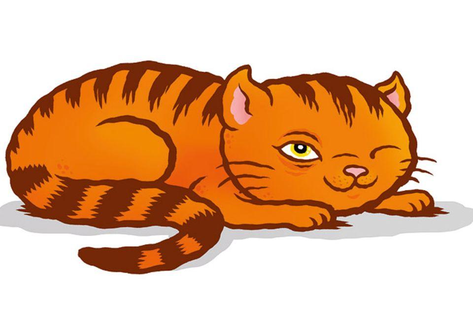 Tiersprache: Katzensprache für Anfänger