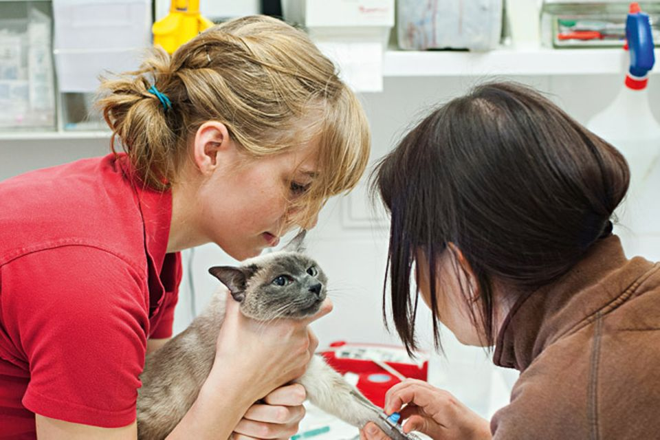 Tierklinik: Ein Tag in der Katzenklinik