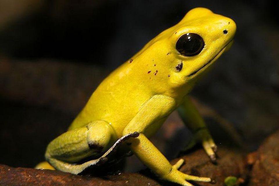 Tiere: Bedrohte Tierarten im Amazonas