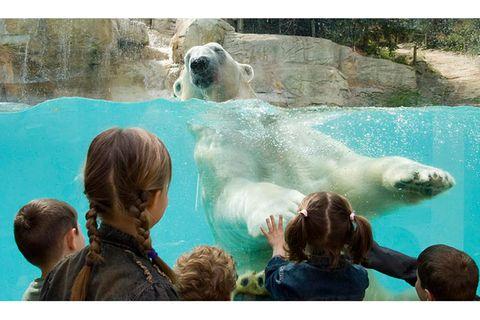 Diskussion: Meinungen zum Zoo