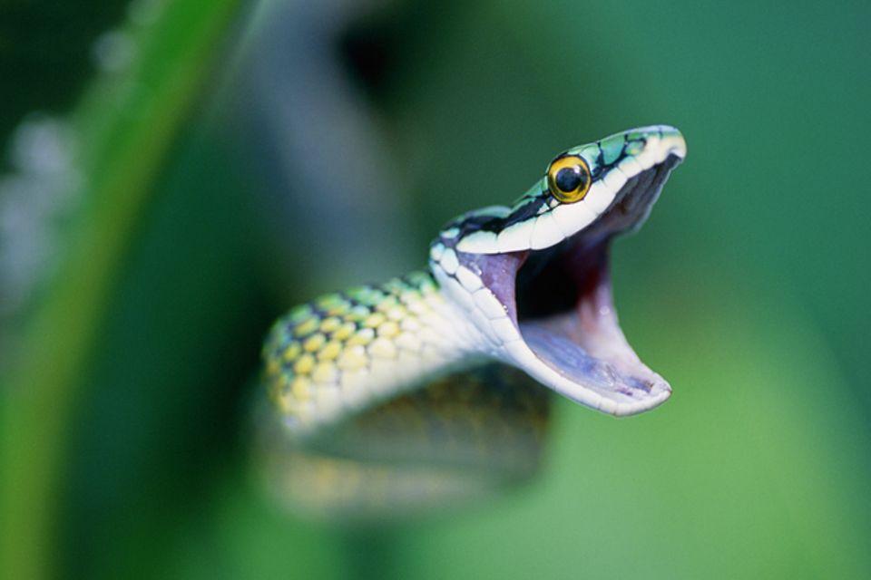 Reptilien: Schlangen - Die leisen Jäger