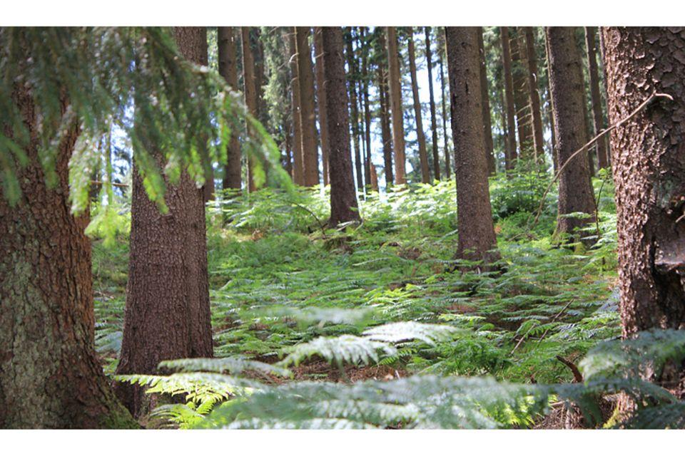 Botanik: Wälder der Welt