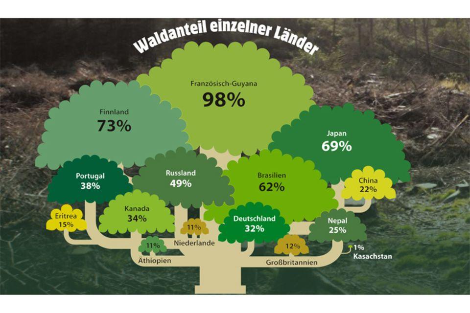 Botanik: Unsere Wälder: Wichtige Fragen und Antworten