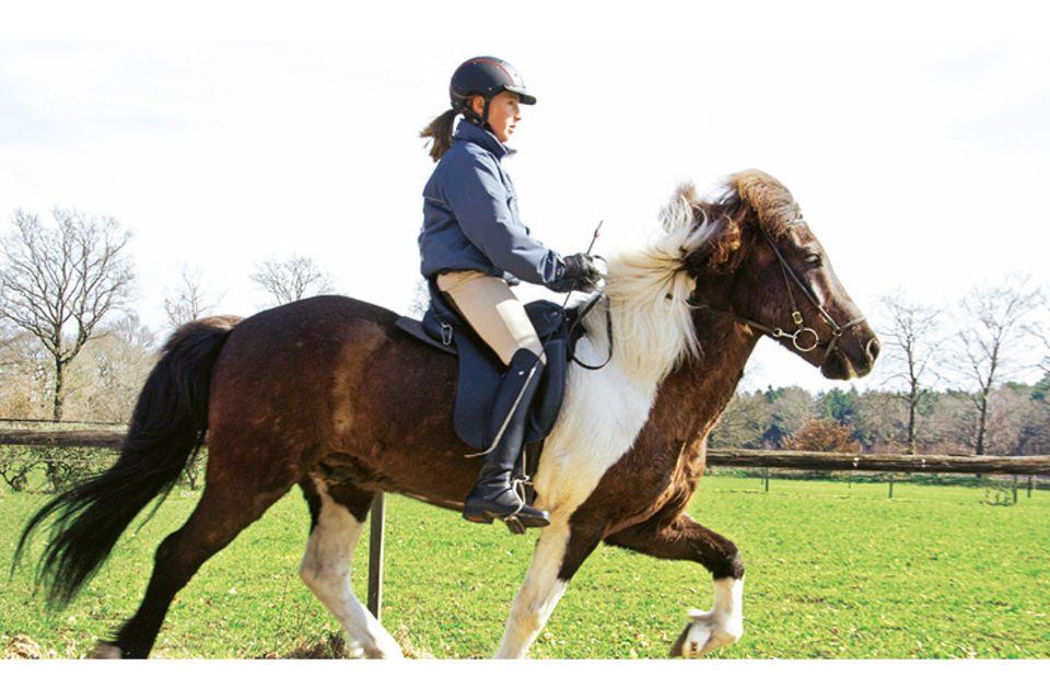 Pferde: Video: Islandpferde