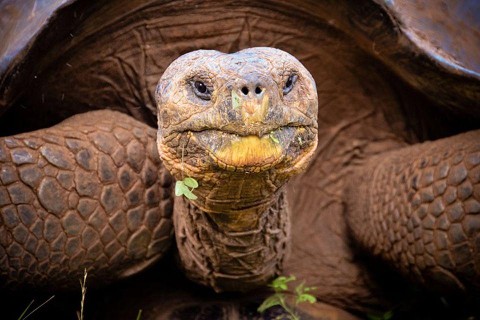 Gib mir fünf: Fünfmal staunen über Schildkröten