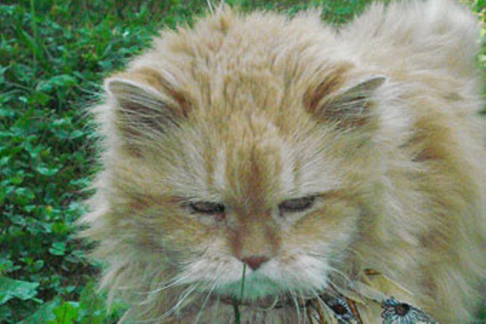 Tierische Helfer: Besuchskatzen