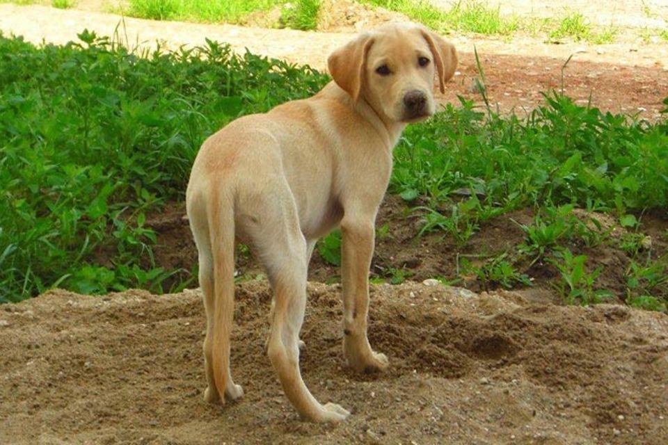 Tierische Helfer: Epilepsiehunde