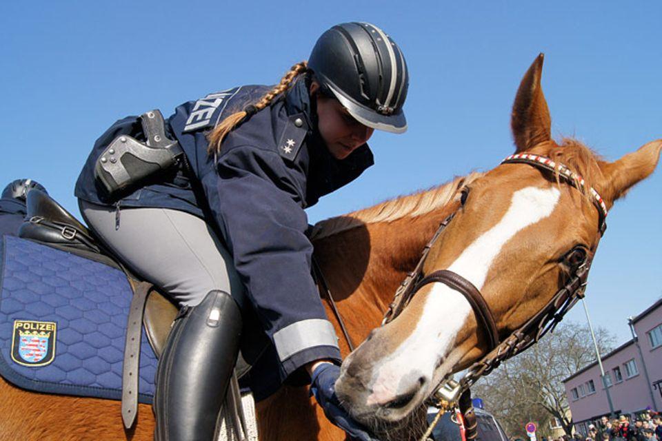Tierische Helfer: Polizeipferde