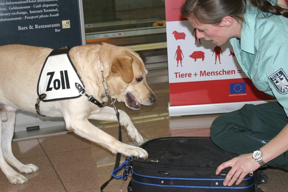 Tierische Helfer: Artenschutzspürhunde