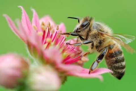 Tierwelt: Bienen: Keine Angst vor Stichen