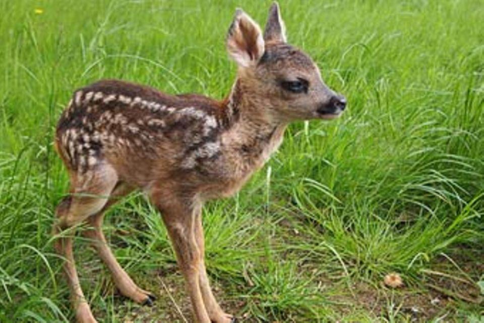 Tieren helfen - gewusst wie