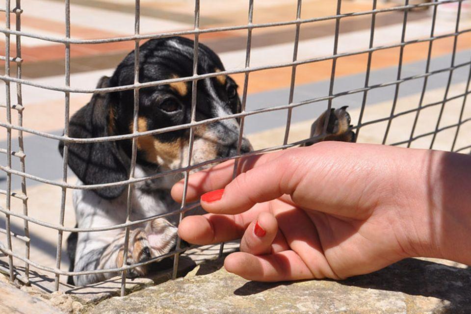 Im Tierheim: Straßenhunde auf Malta