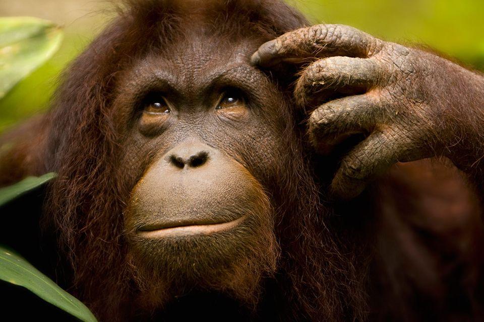 Tiere: Tierisch klug