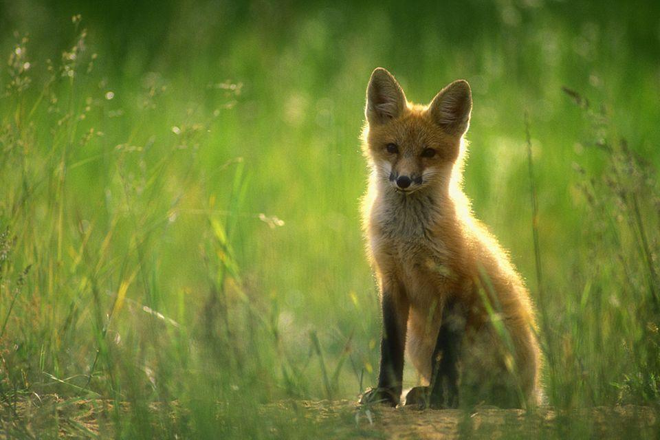 Tierkinder: Ganz schön ausgefuchst