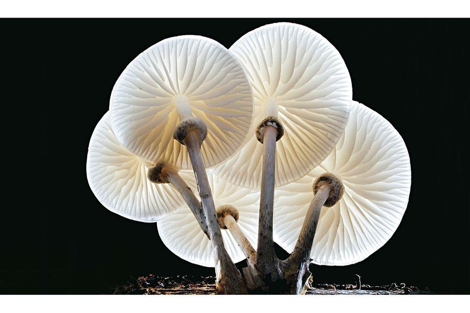 Pilze: Planet der Pilze