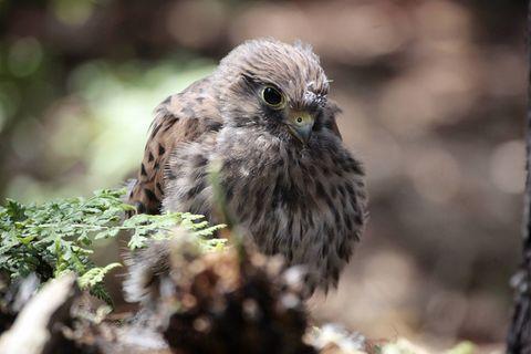 Tierkinder: Nesthocker in luftigen Höhen