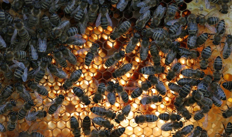 Rettet die Bienen: Warum die Bienen bald aussterben könnten