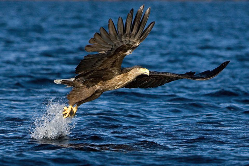 Tierfotograf: Naturkrimis