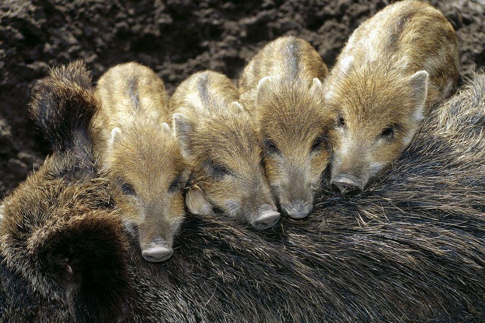 Tierkinder: Immer der Nase nach