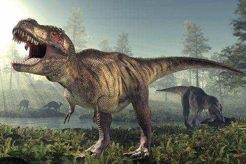 Dinosaurier: Sue, ein Killer im Überformat