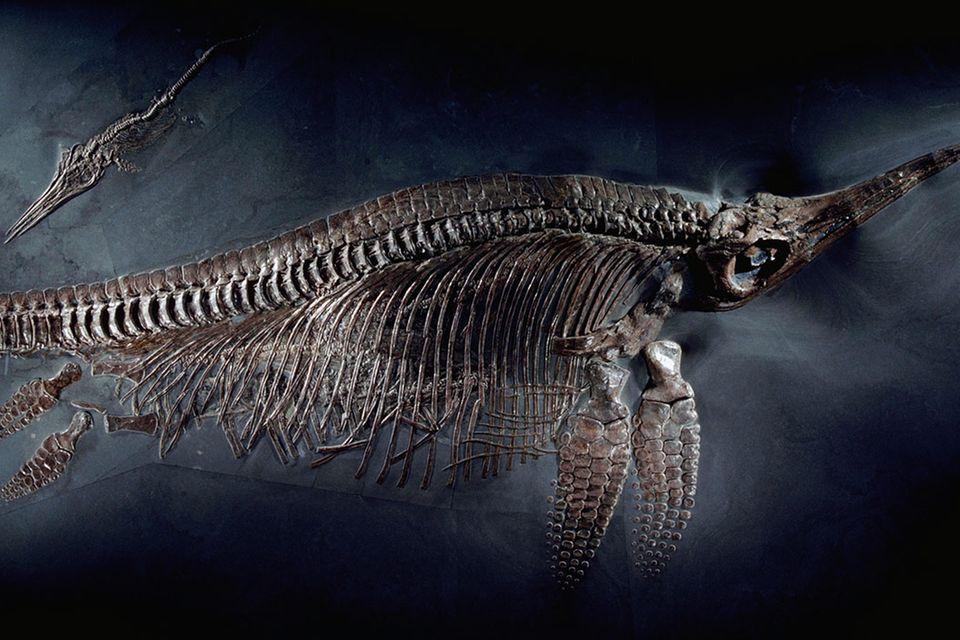 Ichthyosaurier: Urzeit-Monster der Meere