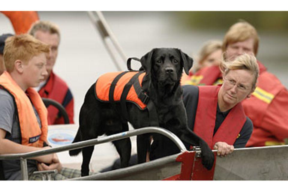 Rettungshunde: Spürnasen auf Spurensuche