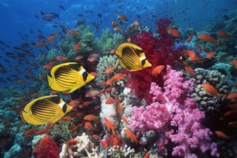 Artenvielfalt in Gefahr