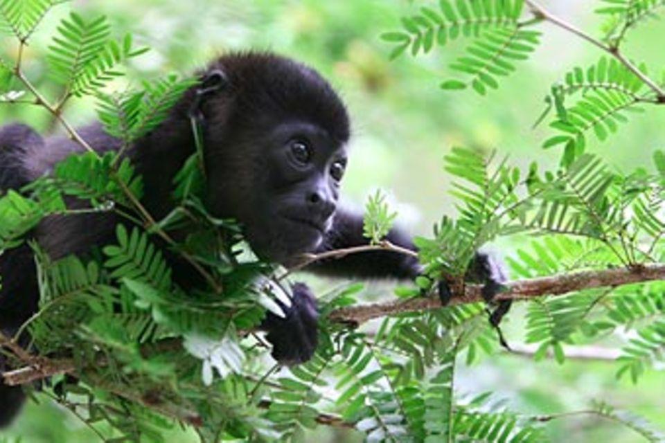 Costa Rica: Hilfe für Tiere im Dschungel