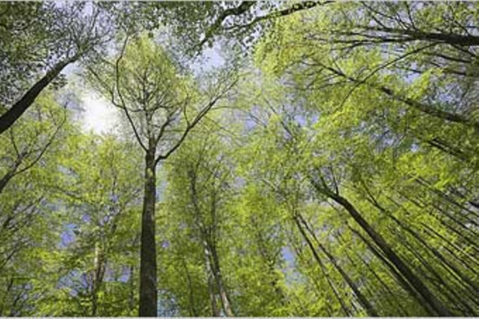 Umweltschutz: Umwelt-Gedenktage: Natur weltweit schützen