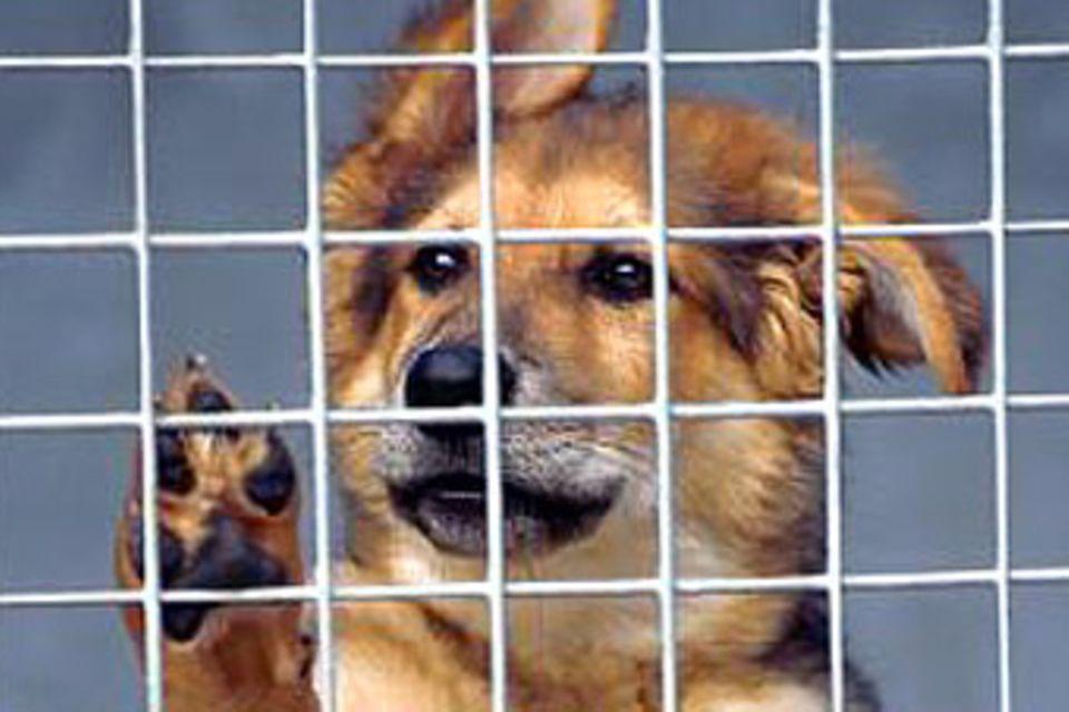 Auch Tiere haben Rechte!