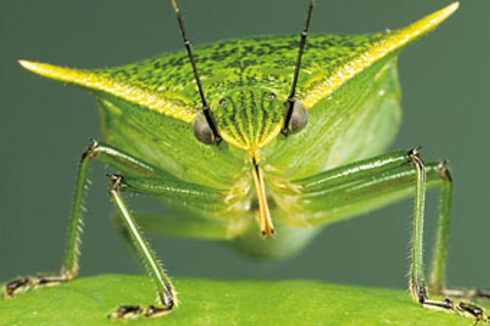Heteroptera: Seht euch mal die Wanzen an!