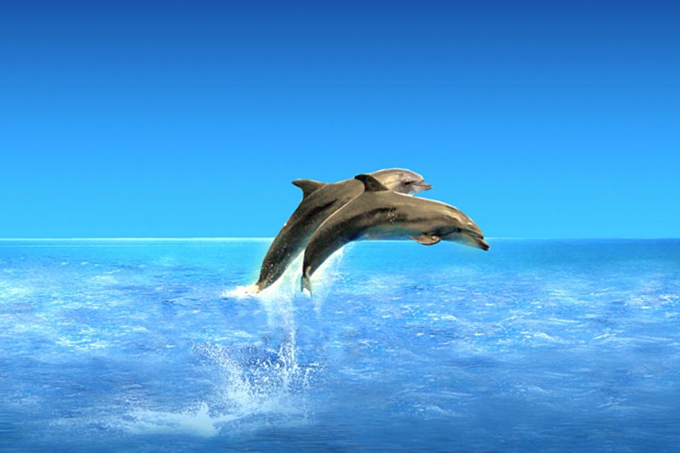 Delfine: Geräuschvolle Schnattermäuler!