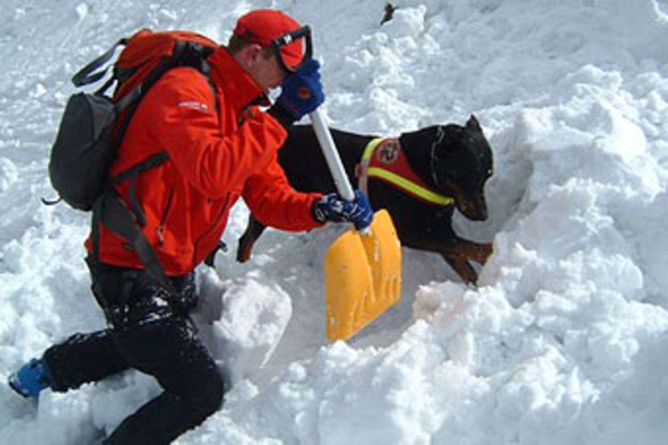 Lawinenhunde: Spürnasen im Schnee