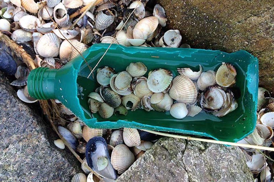 Umweltschutz: Strandgut mal anders