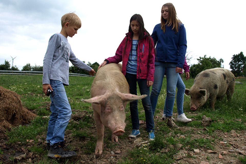 Tierschutz: Kinder für Schweine