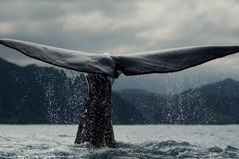 Tierschutz: Wale - bedrohte Giganten