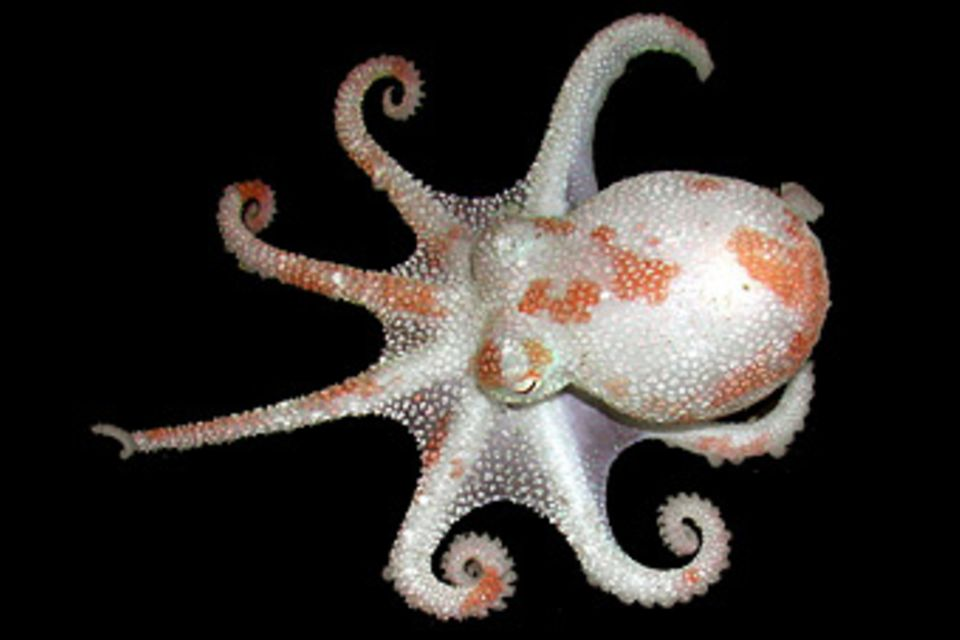 Fotoshow: Kraken
