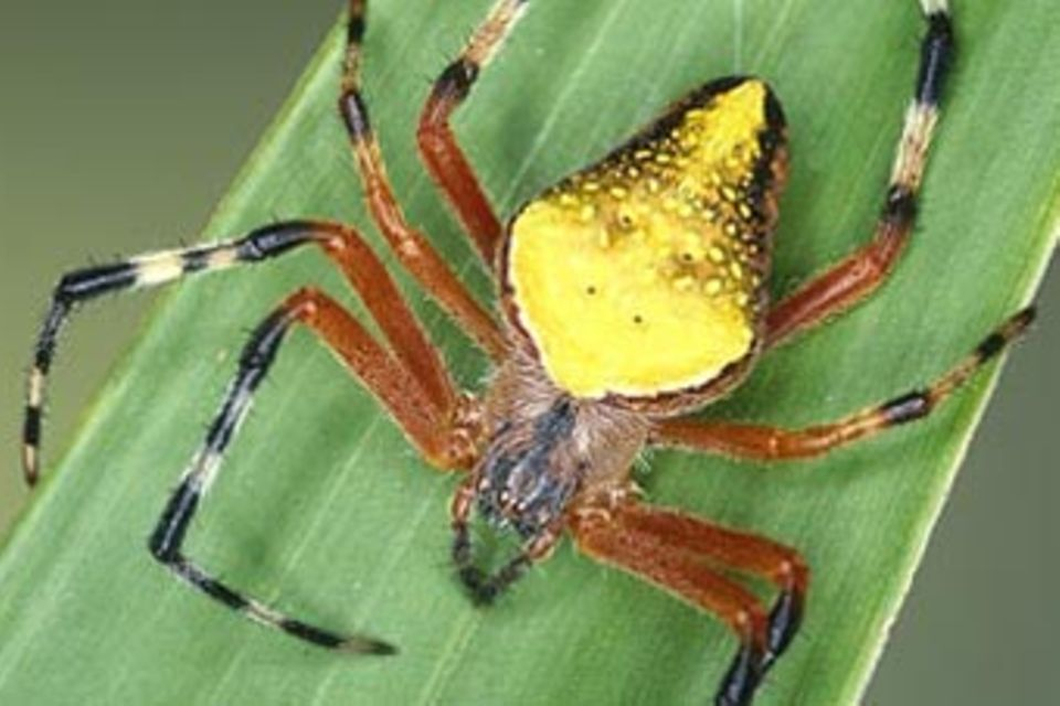 Spinnen: Faszinierende Krabbelviecher