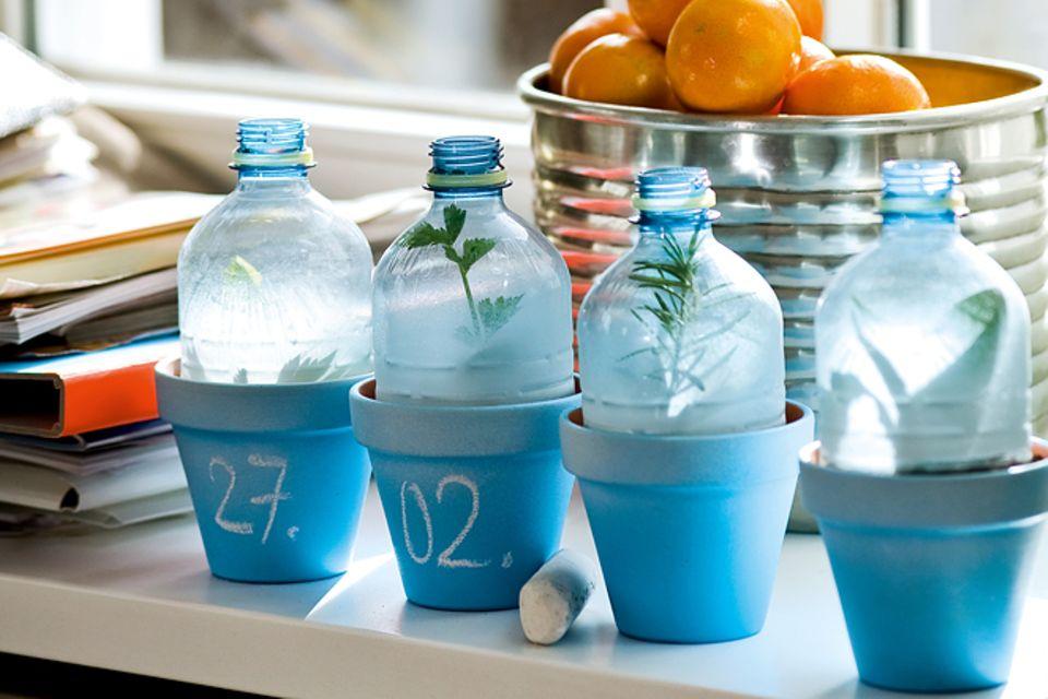 Upcycling: Flaschen-Gewächshaus