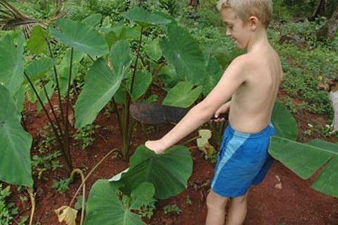 Fidschi-Tagebuch, Teil 14: Alles wächst im Paradies