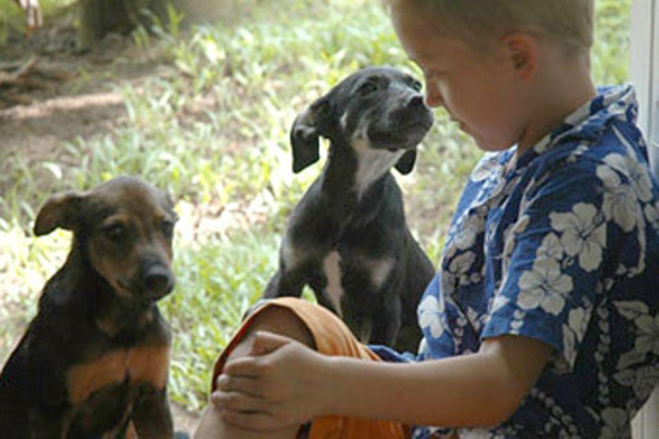 Fidschi-Tagebuch Teil 3: Drei Hunde sind besser als einer