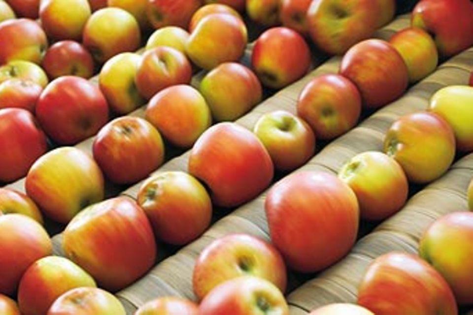 Von zickigen und braven Äpfeln