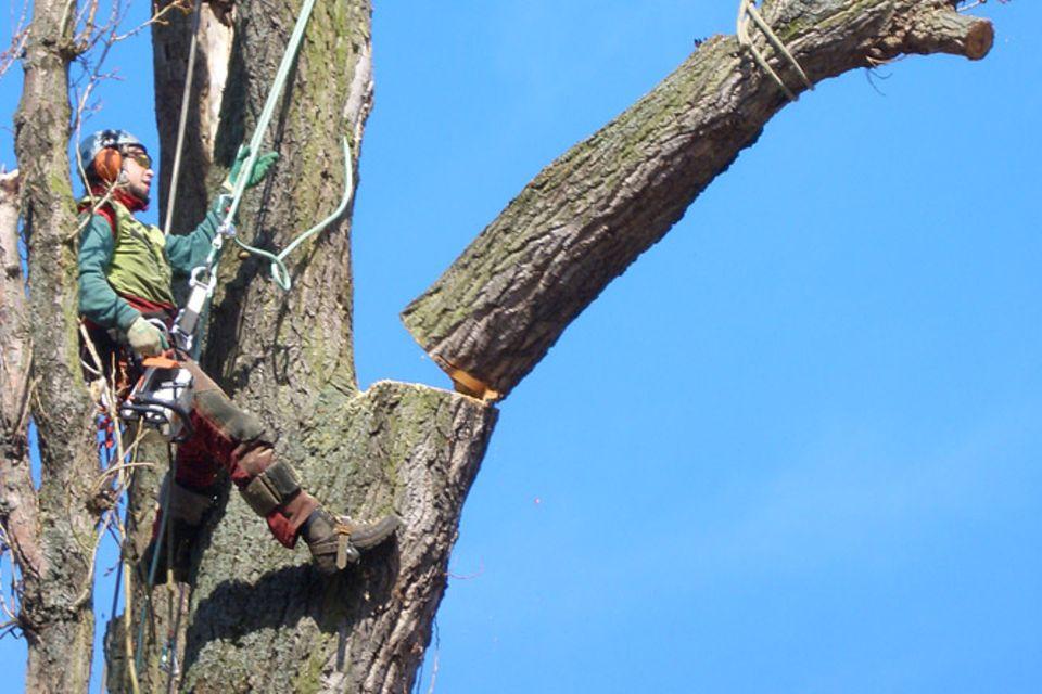 Beruf: Baumpfleger