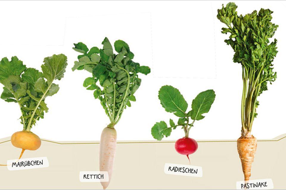 Buchtipp: Garten statt Supermarkt
