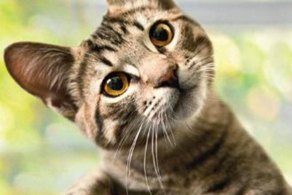 Katzen: Katzensprache verstehen