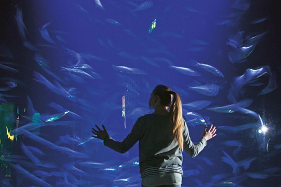 Fische: Hinter den Kulissen: im Meeresmuseum