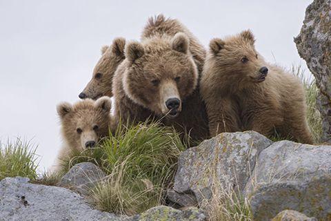 DVD: DVD-Tipp: Im Land der Bären